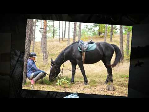 Horseback riding in beach and fairytail forests in Adazi & Lilaste Nature Park