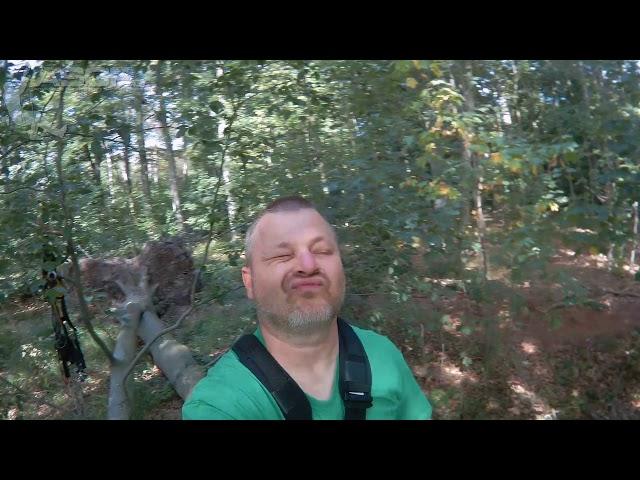 Baumklettern in der Rosellerheide
