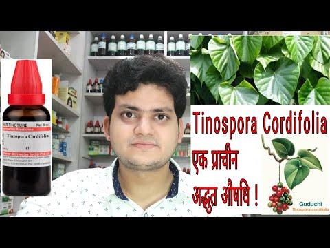 गिलोय। Tinospora Cordifolia ! Homeopathic medicine tinospora ? Sign and symptoms !