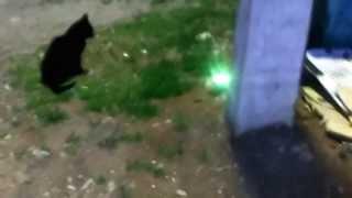 Коты-зомби