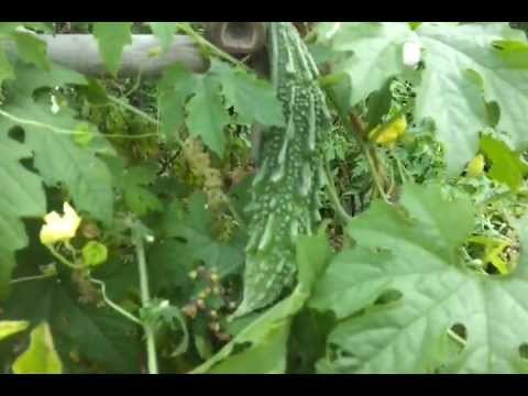 Growing vegetables in containers or pots on a terrace for Terrace vegetable garden india