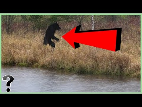 What If The Michigan Dogman Was Real? - YouTube