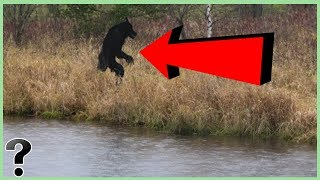 What If The Michigan Dogman Was Real?