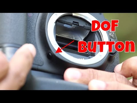 Using your DOF (Depth of Field) button on your DSLR Camera
