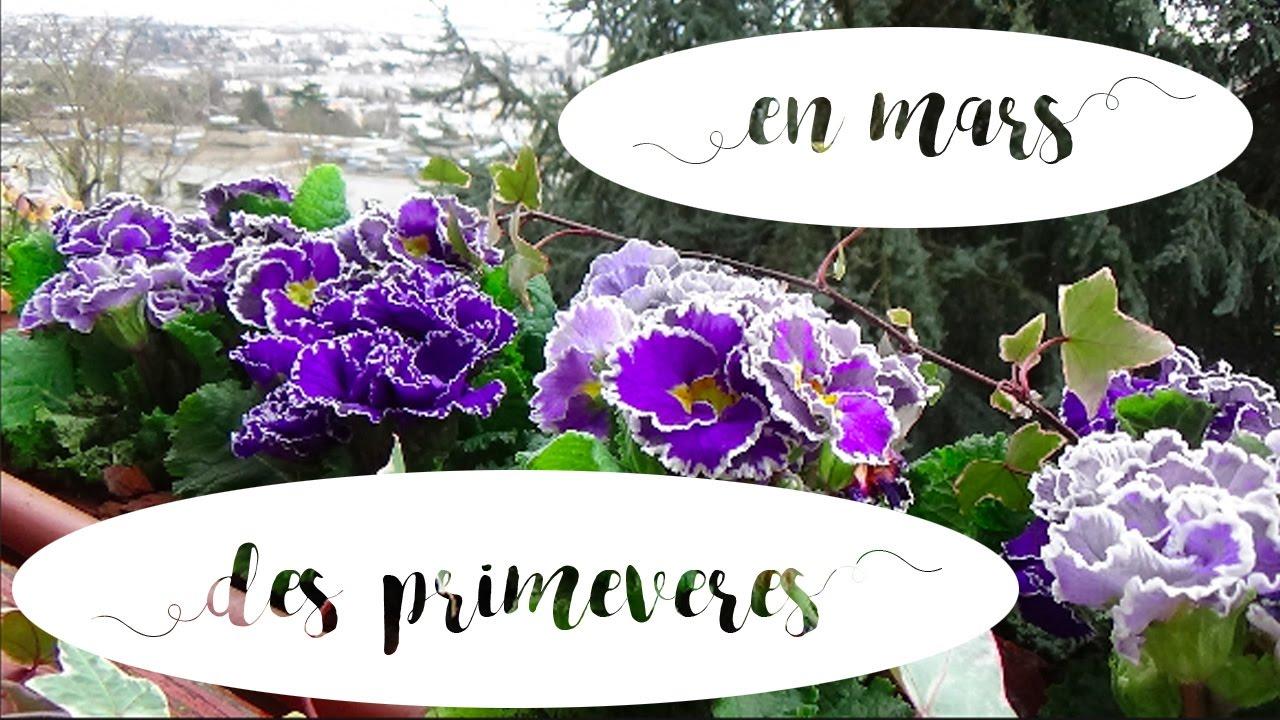 en mars on r veille le balcon avec des primev res jardini re de printemps 1 youtube. Black Bedroom Furniture Sets. Home Design Ideas
