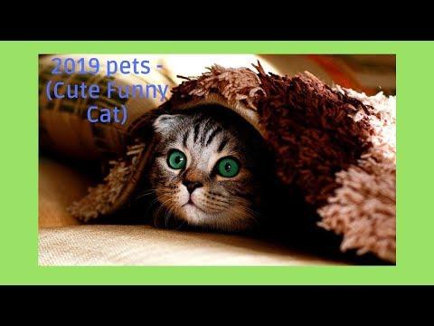 2019 pets - (Cute Funny Cat)
