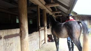 Breaking A Horse The Proper Way With Alvin R Boudy Jr.( part one)