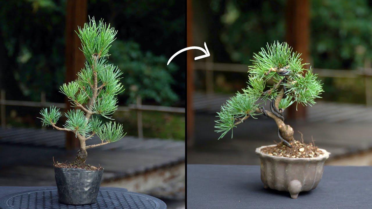 Download Creating a Pine Bonsai