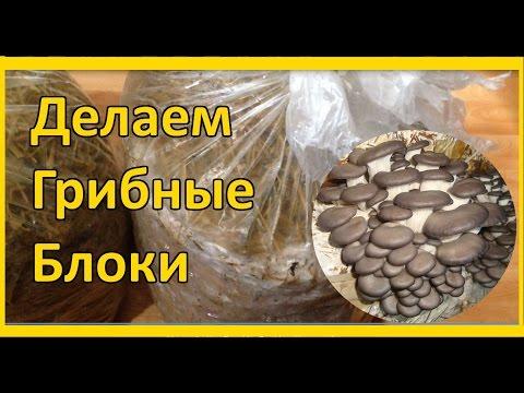 Выращивание грибов в домашних условиях для новичков: Уход