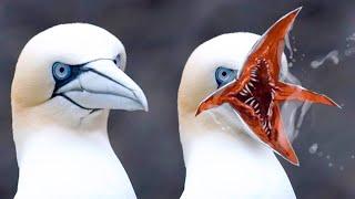 10 ऐसे पक्षी जिन्हें देखनेके लिए नसीब लगता है ||  10 Rare And Beautiful Birds In The World