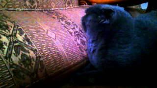 Кошка Отказывается от корма