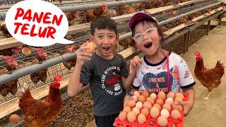 Pixel Panen Telur di Kandang Ayam, Telornya Banyak Banget, Seruuu !!!