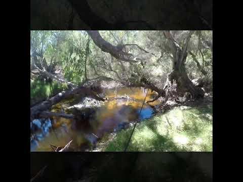 Moore River Breamin