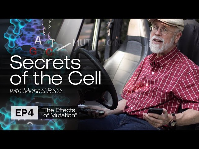 The Effects of Mutation (Secrets of the Cell with Michael Behe, Ep. 4)