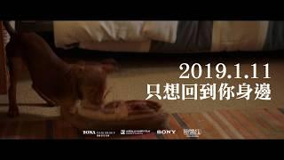 【為了與你相聚】30秒預告- 狗狗人類麻吉篇 01.11 只想回到你身邊