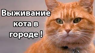 Выживание кота в городе ! ( Cat Survival )