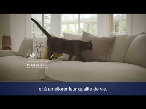 Croquettes Proplan Pour Chat De 7 Ans Et Plus