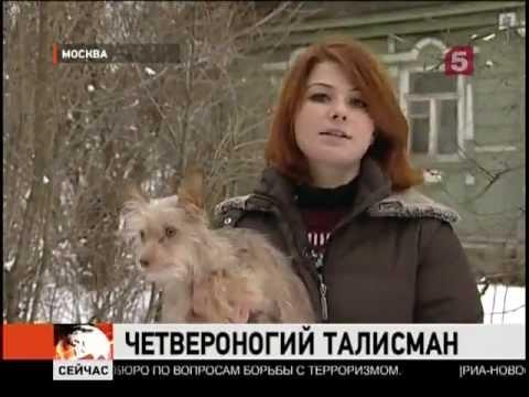 Порода собак.московский дракон фото