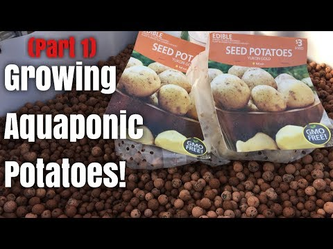 Growing Aquaponic Potatoes (Part 1) PLANTING