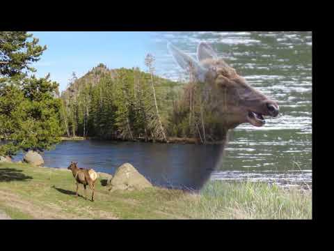 Yellowstone Wildlife Spring 2019