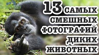 13 Самых Смешных Фотографий Диких Животных