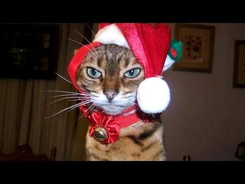 CATS and DOGS with CHRISTMAS PRESENTS – You've hardly seen BETTER than THIS! – Laugh with us!