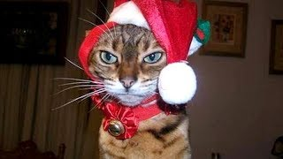 CATS and DOGS with CHRISTMAS PRESENTS - You've hardly seen BETTER than THIS! - Laugh with us!