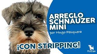 Técnica De Stripping Y Tijera Schnauzer Miniatura | Peluquería Canina Profesional | Escuela Procan