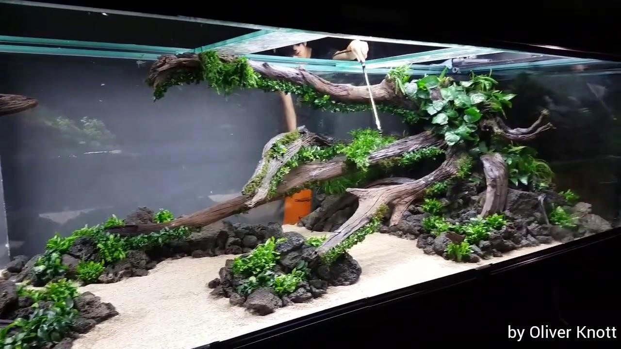 Oliver Knott Aquarium - 1000+ Aquarium Ideas