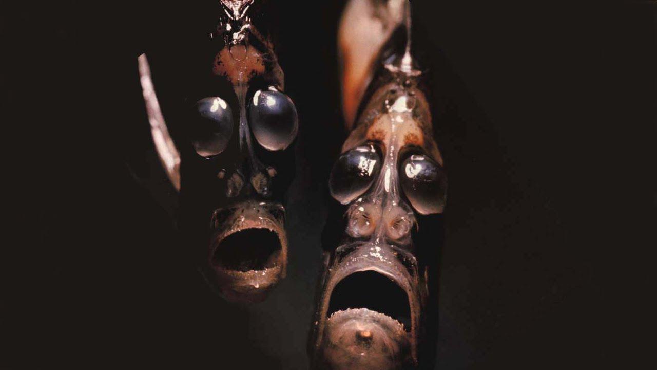 ¿Por qué son tan raros los animales de los fondos marinos?