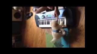 Uni Is My 11 Week Old, 2 5 Pound Rescue Poodle Mix's Third Piano Lesson