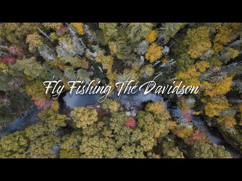 FLY FISHING THE DAVIDSON With Brown Trout Fly Fishing