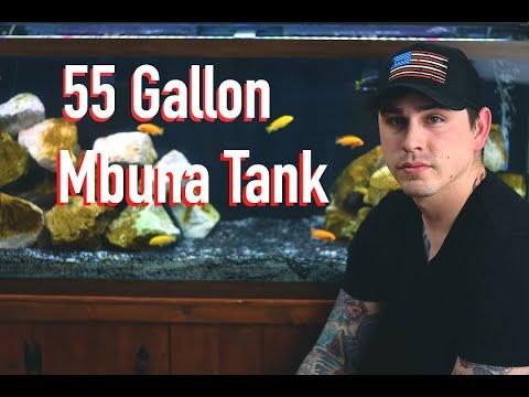 55 Gallon Mbuna Aquarium (My Aquarium Spotlight Episode 1)