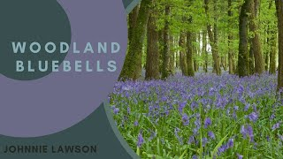 8 Hours Nature Sounds Relaxation-Bluebell Woods Birdsong Relaxing Meditation Forest Sounds