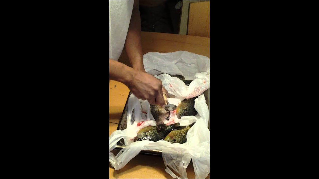 Floyd mayweather fillets bluegills youtube for Panhandler fish filleter