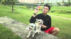 Wellness® Pet Food (Silversky Pets Singapore)