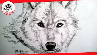 How to Draw a Wolf (Complete Drawing Lesson Narrated) | how to draw hairy animals