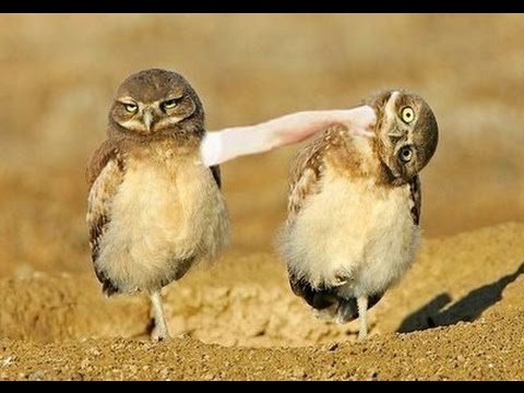 funny talking animals birds