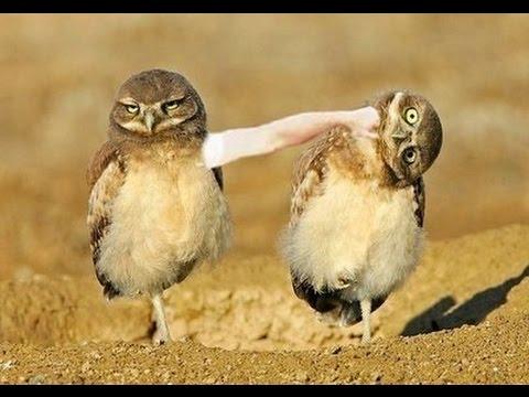funny talking animals birds