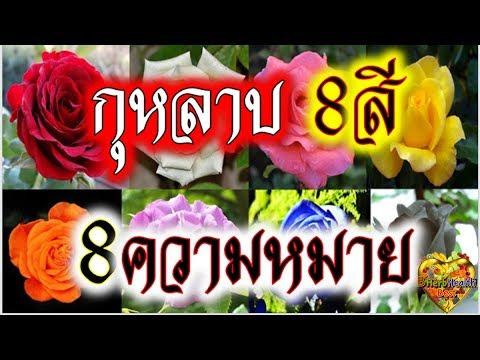 ดอกกุหลาบ 8 สี 8 ความหมาย 8 สิ่งดีๆใช้แตกต่างกัน คุณค่า ล้ำลึก ซึ้งใจ Rose 8Colors Love Relationship