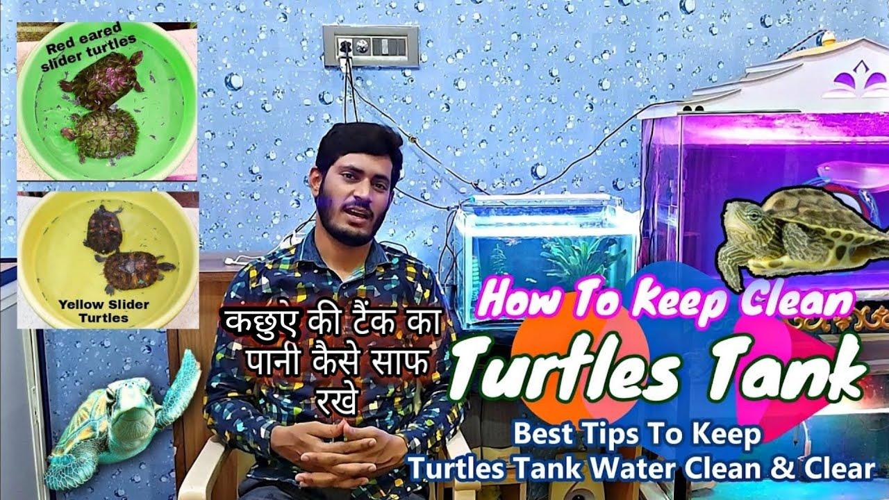 How to Keep Clean Turtles Tank water - Simple steps to keep clean tank water