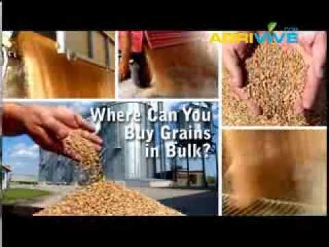 Bulk Grains Broker, World Grain Price, World Grain Trade, World Grain Price, World Grain Trade