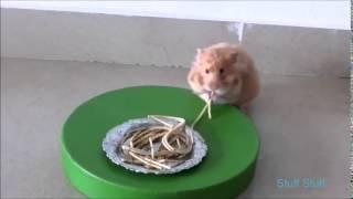 Милые Веселые Хомячки!   Funny Hamster 2015
