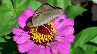 Бабочки Жирновского края Lovely butterflies!
