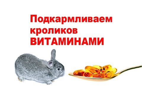 Подкармливаем кроликов ВИТАМИНАМИ