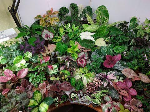 Немного о качестве растений и растения едут в новый дом