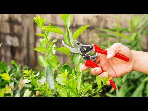 Зачем и когда нужно обрезать растения? Правильная обрезка растений.