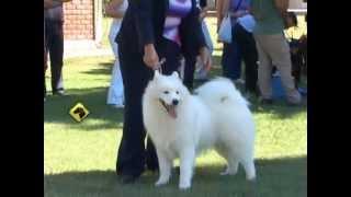 """""""perros En Acción"""" Mendoza Kennel Club"""