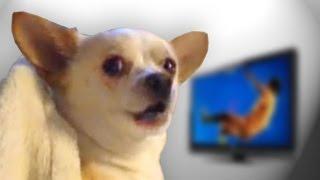 Spoiler Dog thumbnail