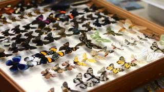 Coleção Entomológica UFPR - Lepidoptera / CNPq